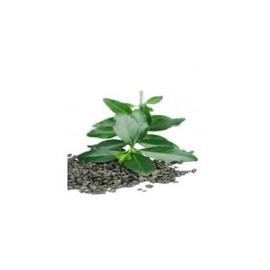Alfaliquid Thé vert