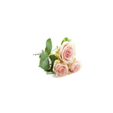 Alfaliquid Rose